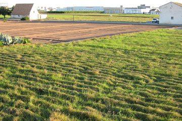 Campo de Cultivo Horchata