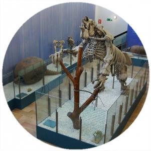 Museo di Scienze Naturali, Musei a Valencia,