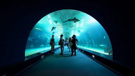 Oceanographic underwater tunnel
