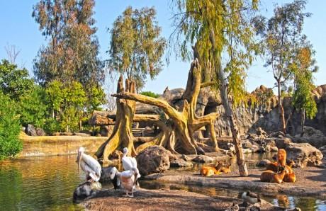 La sabana Aficana en Bioparc Valencia
