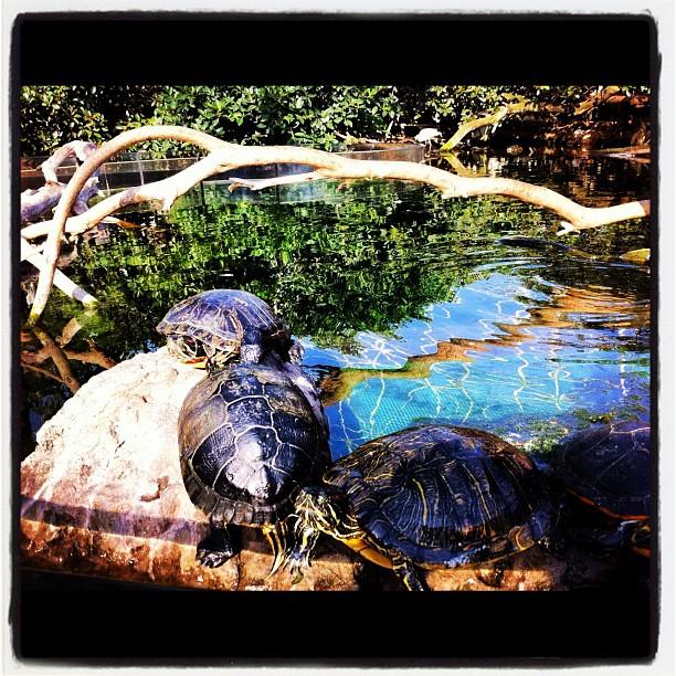 #valencia #oceanografic #tortugas #turtles