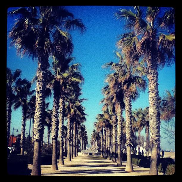 Blue skies & palm trees