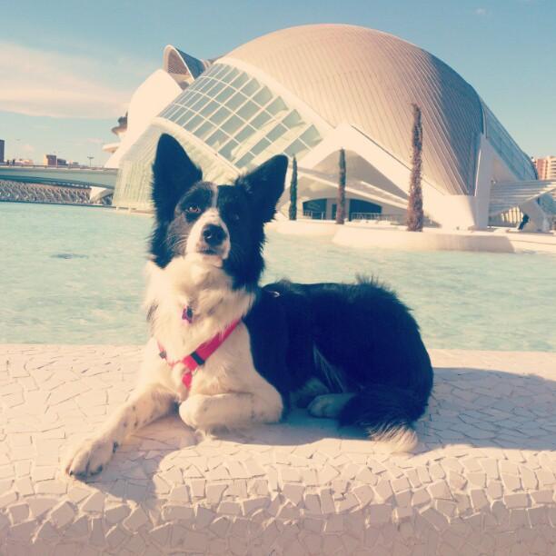 #Cora #collie #border #bordercollie #blancoynegro #ciudaddelasartes #art #arquitectura #arte #doggy #puppy #cachorro #lovevalencia #valencia