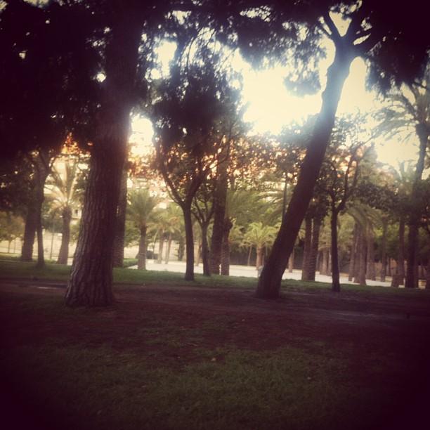 Early run #lovevalencia