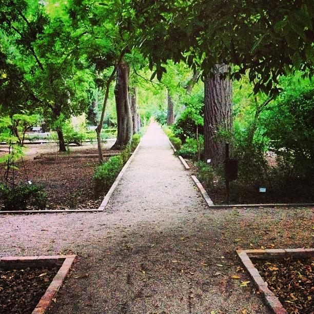 Un paseo nocturno por el botánico es la mejor manera de daros las buenas noches a tod@s!!!! I ? botánico