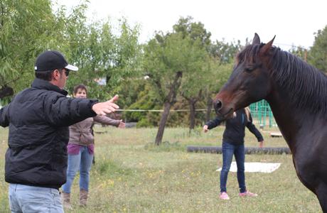 Potencia-T, Liderazgo, Coaching y Caballos en Valencia