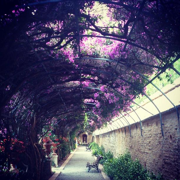 #valencia #lovevalencia #jardines #garden #Monforte disfrutanfo de un buen paseo #nice #dream