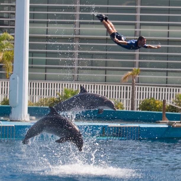 The Dolphin show was one of the highlights! #valencia #lovevalencia #valenciagram #españa #instagood #2instagood
