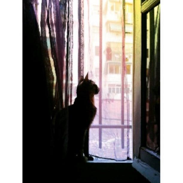 #instapicture #instalove #instagatos #instacats #instacats #instaphoto #instapic #amazing #awesome #adorable #iloveanimals #ilovecats #blueeyes #eyes #lovevalencia #valencia #bestpicture #bestpic #bestphoto #pink #nose #followme #likeforlike #kitty #kitten #window #summer #bored #boring