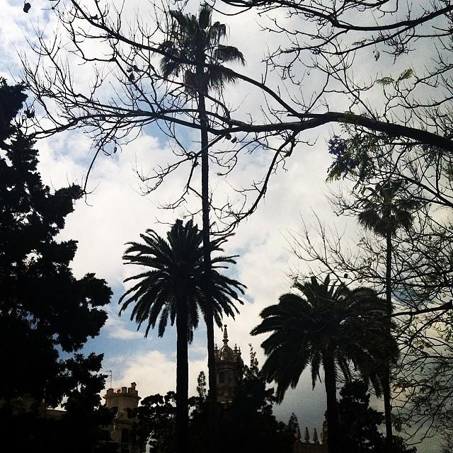 #mussol78 #glorieta #valencia #jardín #palmeras #valenciagram #valenciaenamora #lovevalencia #ilovevalencia #estaes_valencia #estaes_universal #estaes_españa #estaes_todo #comunitatvalenciana #ig_valencia #fotomovil_es