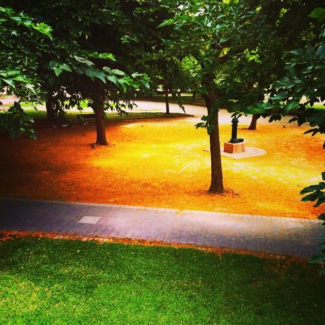 #mussol78 #viejo #cauce #turia #jardín #acacia #valencia #valència #valenciacity #valenciagram #valenciaenamora #lovevalencia #ilovevalencia #estaes_valencia #estaes_españa #estaes_todo #estaes_universal #ig_valencia #igersvalencia #igerslatino #inst_international #insta_international #fotomovil_es #photoiphone #comunitatvalenciana