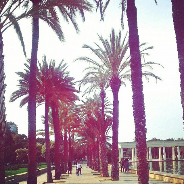 #lovevalencia #dontwanttoleave #yearabroad #valencia #palmtrees  #spain