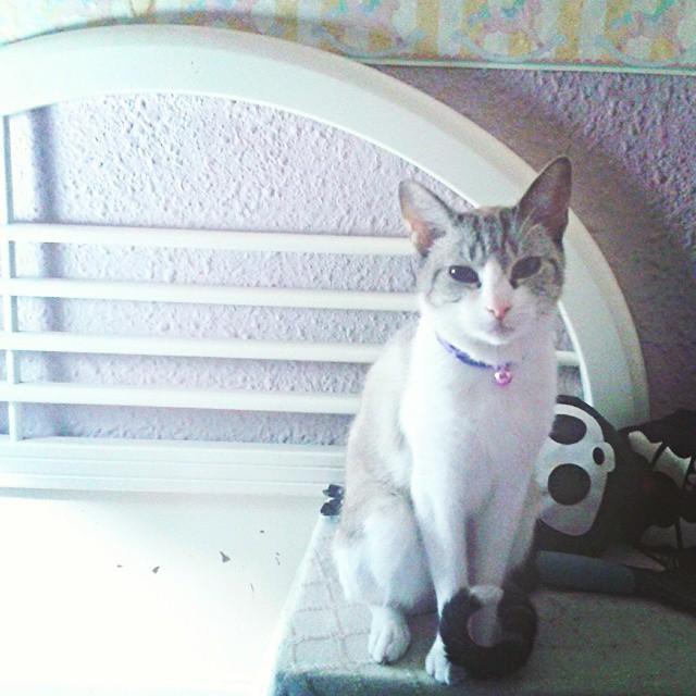 #cat #cats #instacat #instacats #kitty #meow #miau #lovevalencia #hot #sun #summer #purr #hellokitty #kittys #instakitty #sandy #vsco #vscocam #valencia #spain #españa