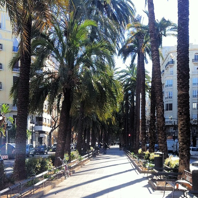 #mussol78 #valencia #avenida #palmeras #palms #valenciagram #valenciaenamora #lovevalencia #ilovevalencia #ig_valencia #estaes_valencia #estaes_españa #estaes_universal #estaes_todo #comunitatvalenciana #inst_international #fotomovil_es #ig_valencia