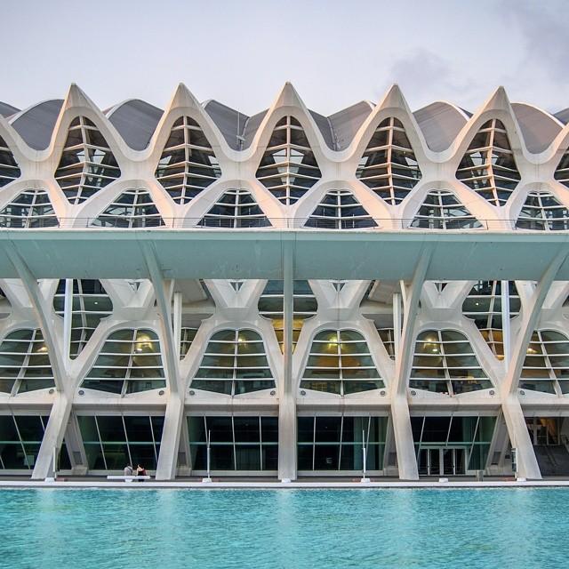 Skeleton.  Esqueleto.  Museo Principe Felipe - Valencia - Spain.  #valenciagram #Valencia #vlc #cityofartsandsciences #ciudaddelasartesylasciencias #calatrava #lovevalencia #VLC #spain #españa #museo #museum #cayc #arquitectura #modern_architecture #architecture #burjassot #rafelbuñol #summer