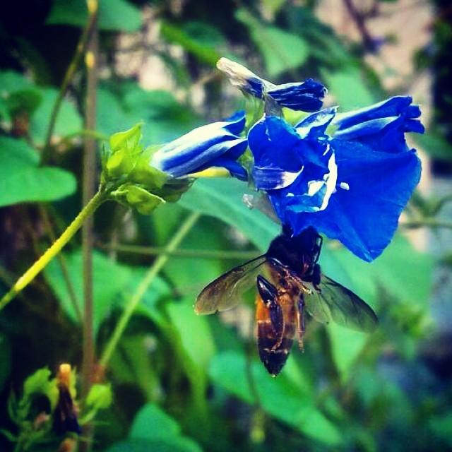 Honey Bee!!