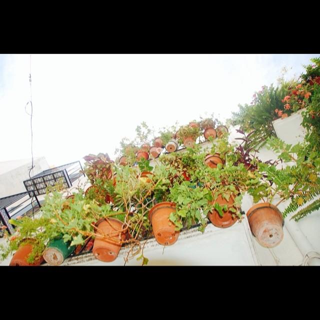Las flores y las plantas son criaturas calladas que estimulan todos los sentidos, menos el oido. naturaleza verde#enfocae #estaes_de_todo #ig_valencia #instagrafias #igerscomunitat #fotomovil_es ##lovevalencia #larecomendaciondeldia #valenciagram #valenciagrafías #alicantegram #ig_valencia