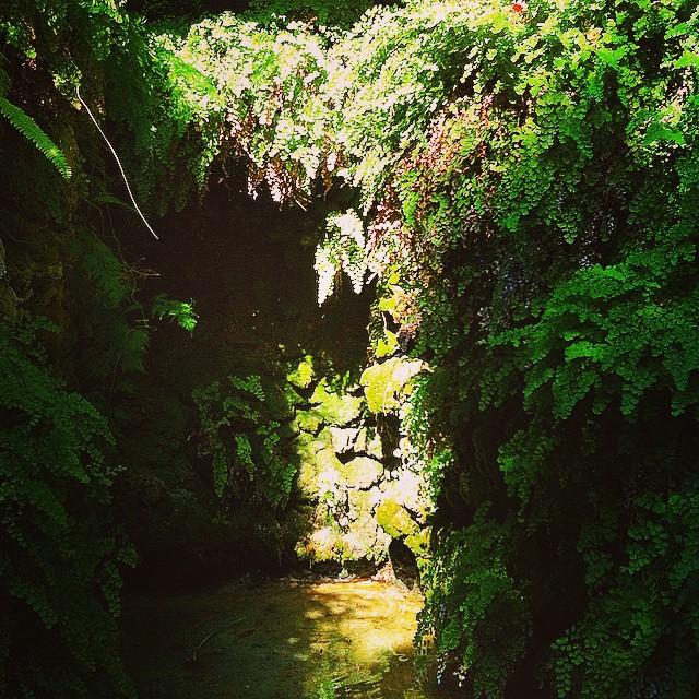 #mussol78 #jardin #de #monforte #valència #fuente #helechos #valenciacity #valenciagram #valenciaenamora #lovevalencia #loves_valencia #estaes_valencia #estaes_espania #instagood #instapics #instamessage #insta_colourfull #insta_international #placeofworld #ig_europe #iphonepics #followback