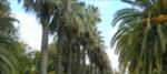 Ruta en Parques y Jardines de Valencia