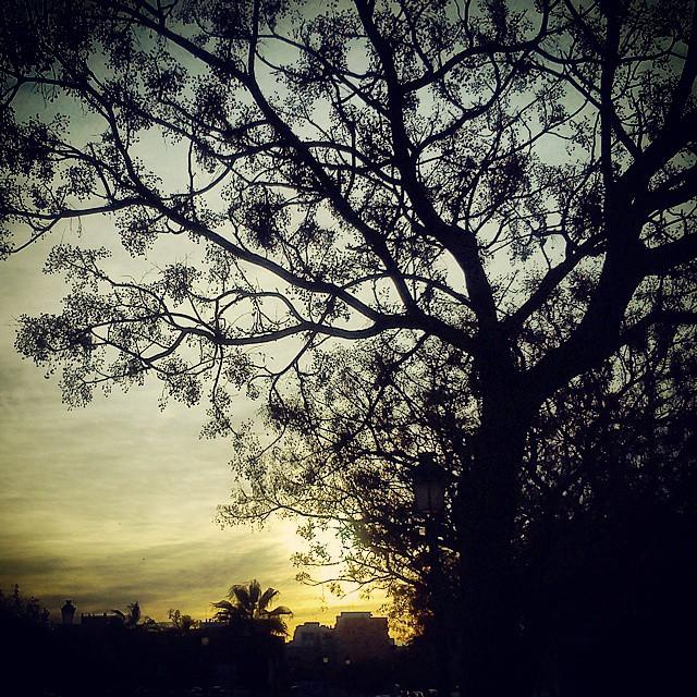 #valenciagram #valencia #instavalencia #igersvalencia #igerspain #ilovevalencia #instasky #sky #skyporn #picoftheday #postcardsfromtheworld #inspiring_photographers11 #toprankrepost #lovevalencia #españa