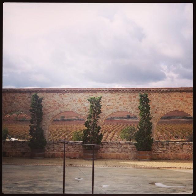 #mustiguillo #mestizaje #bodega #requena #vino