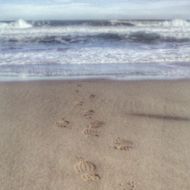 #playa #huellas #orilla #mar #valenciagram #lovevalencia #devesa #devesa #elsaler #saler