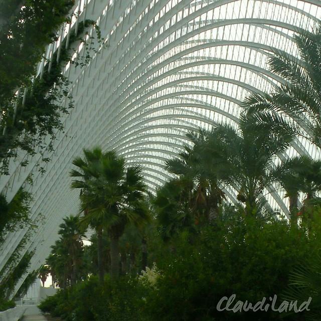 VALENCIA  #valencia #spain #espana #visitvalencia #calatrava #calatravaarchitecture  #calatrava #palms #land #archilovers #art #landscape  #green #followValencia  #plants #enjoyValencia #valenciagram #envalencia #loveValencia