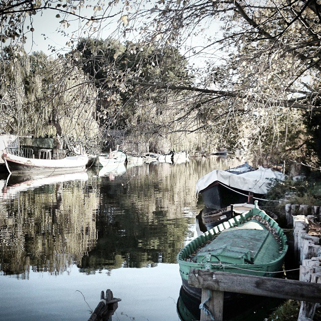 #valencia #albufera #ciscoes #lovevalencia #terra #magic #paisajemagico #love