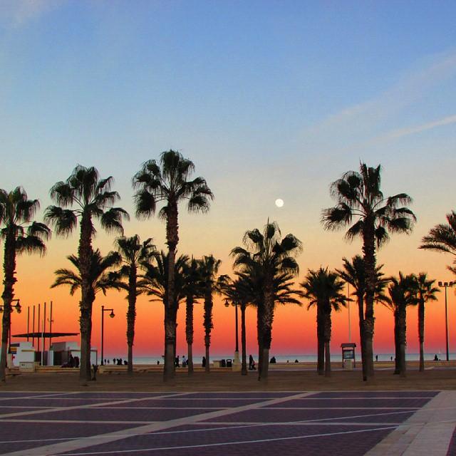 Il fait bon vivre à #valencia #sansfiltre #coucherdusoleil #atardecer #palmtree #palmeras #playa #palmiers #plage #janvier #enero #beach #praia #janeiro #españa #espagne #spain #espanha