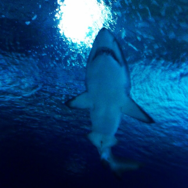 ????????????????????????????#Oceanográfico#oceanografic#valencia#tiburón#shark#underwater#ocean#sealife#blue#instagood#picoftheday#traveling#loveit#lovetraveling#beautiful#lovevalencia#spain#nice#missit#takemeback#TagsForLikes#spagna#viajar#instalike#instatravel