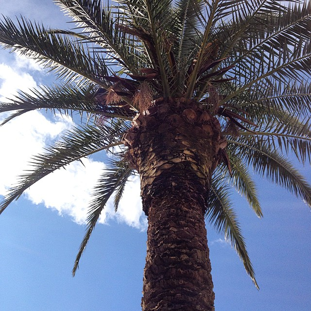 May you never be too busy to stop and breathe under a palm tree ?????????? #love #sun #travel #wunderlast #island #travelbug #relax #beautiful #nature #earthlings #travelgram #instatravel #endlesstraveling #spain #lovevalencia