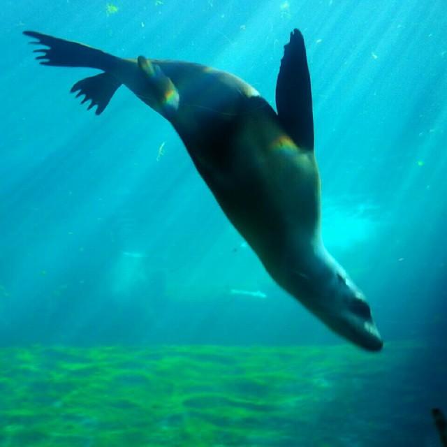 Libertad#happy#antartico#instapic#trueColors#valencia# Oceanografico##instamood # amor#agua#instacool#libertá#Spain #feliz#instamoment #viaggio# photooftheday#viaje#?#instalike #loveValencia #españa #smile#