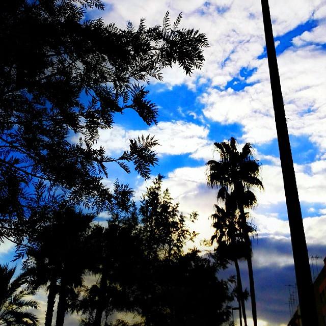 Nubes de viernes por la mañana en Valencia! ? ? #Valencia #Morning  #CloudPorn #Blue #Sky #Clouds #LoveIt #InstaGood #IgValencia #Nature #MyPlace  #Beautiful  #PalmtTree #IgersValencia #Viernes #EstoEsValencia #ValenciaGram #Positive #HappyTime #LoveValencia