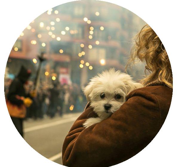 perro asustado en fallas