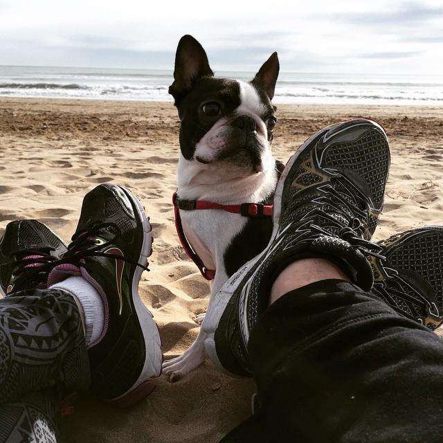 Desayuno con Jackson en su primer encuentro con la #arena de #playa #bostonterrier @walesskas @wayuontheroad #mascotas #maskotas #lovevalencia