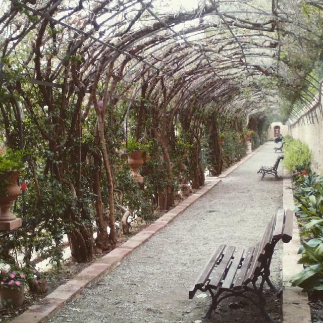 #tuneldeflores #pasajedeflores #parque #banco #jardinesdemonforte #monforte #parque #lovevalencia #valenciagram #jardines