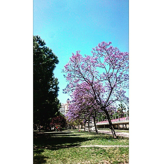 #rioturia #caucedelturia #jardín #jardindelturia #fitness #bike #bici #rio #vlc #valencia #valenciagram #ilovevalencia #lovevalencia