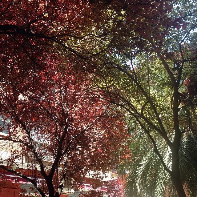 Si miras más al fondo, encontraras la luz. #valencia #street #lovevalencia #nature #naturaleza #naturelovers #tree #light #life #sky #pictureoftheday #photo #pic #peace #sol #sounds #sounds #sensaciones #sentimientos #happy #love #calle #calles #igersvalencia #igers #nice