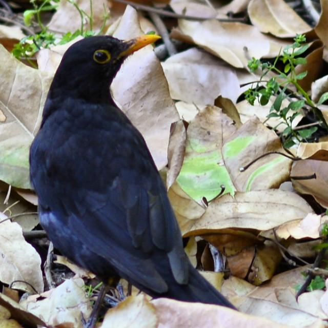 #valenciamola #nature #nikon #nikond7100 #bird #lovevalencia #valencia #jardinbotanico