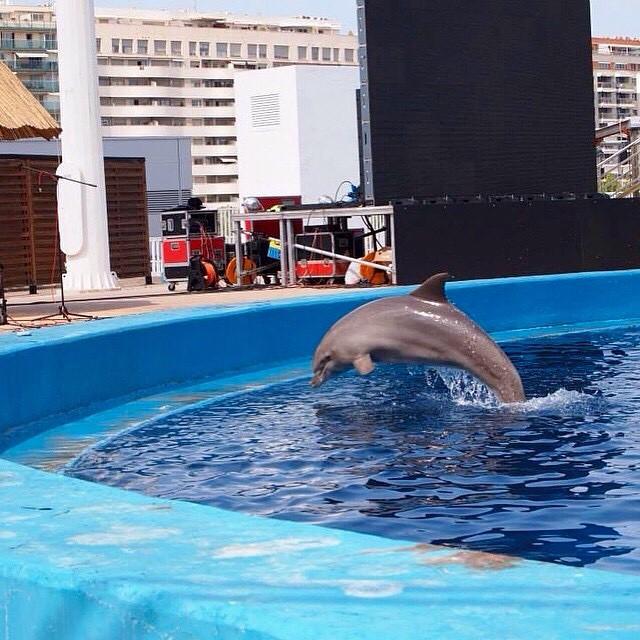 Two summer ago... ?????????? Parco oceanografico di Valencia ???? #spagna#valencia#holiday#friends#lovetravel#ig_spain_#igworldclub#plane#fly#picoftheday#ok_spain#iGersSpain#somosinstagramers#HDR_EUROPE#LOVES_BESTPIC#lovevalencia#architecture#wonderful_places#oceanografico#oceanografic#delfino#dolphin#españa#EspañaInstagram#ontdekvalencia