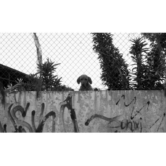 #instasize #mivalencia #mood #miespana #espana #spain2015 #spain2015trip #lovevalencia #valenciastreets #valencia #valenciagram #dog #bnw #blackandwhite #blackandwhitephotography #filmcamera #nikonfm #foreveryoung