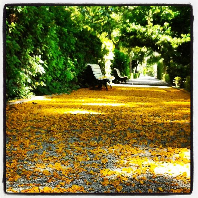#jardinotanic_uv #jardinbotanico #jardibotanic #jardibotanicdevalencia  #loves_valencia #lovevalencia #ilovevalencia