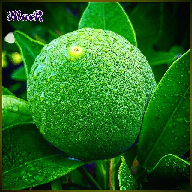 Naranja  #maranjas @petal_perfection  #zumo @resing_perfection  #fruta @simpley_perfection  @ok_spain  #caloor #espacio_spain  #naturaleza_comunidadvalenciana  #perfeccion #comida #izt_splash  #dieta #lovevalencia  #esenciamediterranea
