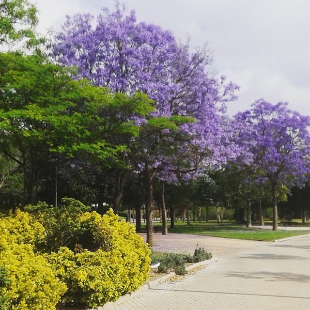 No hace falta un #cielo #azul para deleitarse con los colores de la #primavera. Feliz dia.. feliz #viernes  y mejor #findesemana / We don't need a full #bluesky to enyoy #spring #colors. #happyday .. #happyfryday  and have a #nice #weekend #zapatoscomodos