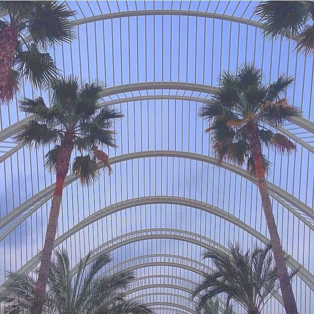?Today it's very hot!?? #Valencia #palm #hot #igers #LoveValencia #city #Love