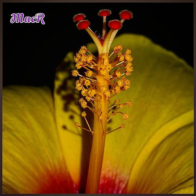 #naturaleza_comunidadvalenciana #izt_splash #lovevalencia #9vaga9 #9flower9 #world_bestangels #total_macro #macrophotography #esenciamediterranea #ok_spain #simple_perfection #petal_perfection #espacio_spain #fotoclub_ab #world_great #todoclick #great_photoworld #macroworld_tr #top_macro #macro_turkey #ok_mencionados #total_shot #world_bestsplash #great_photoworld #h2o_natura #allshotsturkey #turkobjektif #insta_world_free #harte_ace #world_beststreet