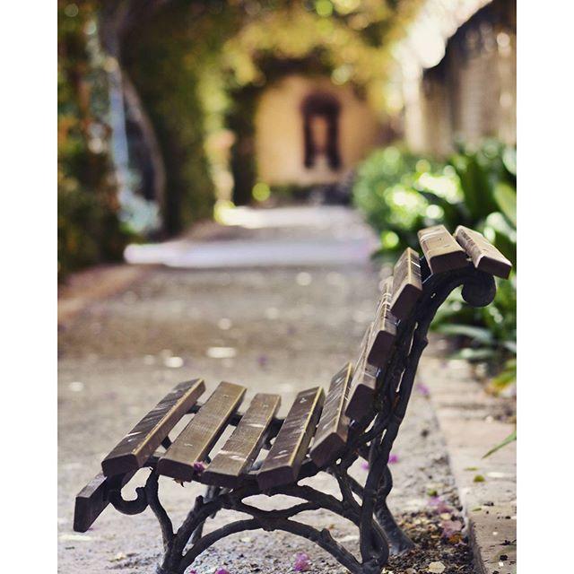Parque de Monforte  #nikon #nikond7100 #d7100 #valencia #valenciamola #lovevalencia #love #nature #park #monforte #loves_valencia #loves_spain #instantes_fotograficos #rinconesbonitos