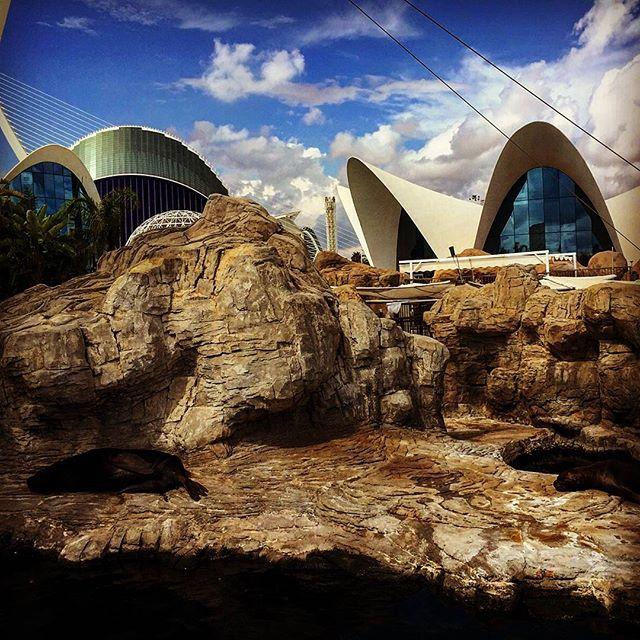 Leones marinos en L'Oceanogràfic #tagsforlike#picoftheday#photooftheday#aquarium#valenciatoday#valencia#estaes_valencia#estaes_españa#loves_valencia#lovevalencia#lovespain#leonesmarinos#valenciamola#valenciaenamora#valenciafilter#valenciagram#agora#ciudaddelasartesylasciencias#ciutatdelesartsilesciencies#ok_valencia#ok_europe#ok_españa