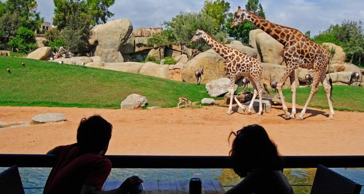 Bioparc Valencia zoo Spagna, Bioparc Valencia, Bioparc come arrivarci, Bioparc biglietti, Bioparc orari