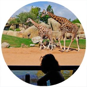 Bioparc Valencia, Zoo di Valencia,